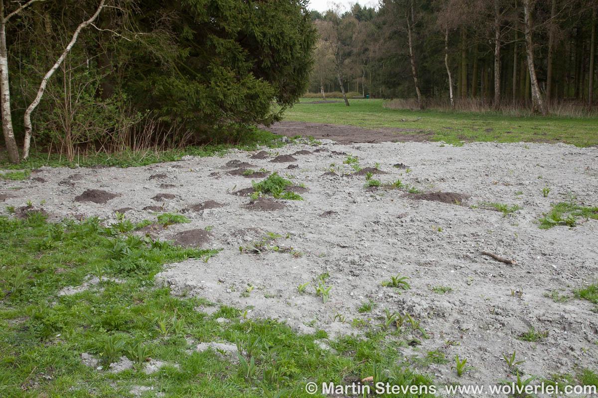 Rotterdam-Kralingse-Bos-MSD-20130423-287560